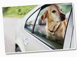 melhor seguro de cão valor
