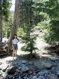 Hiking in the Sierra's