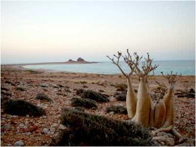 Vegetatie din Socotra