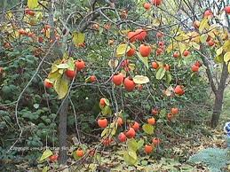 texas state fruit fruit in season may