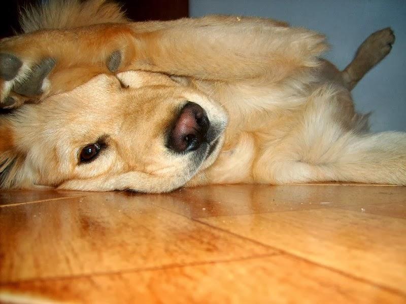 Imagen de amor de los perros
