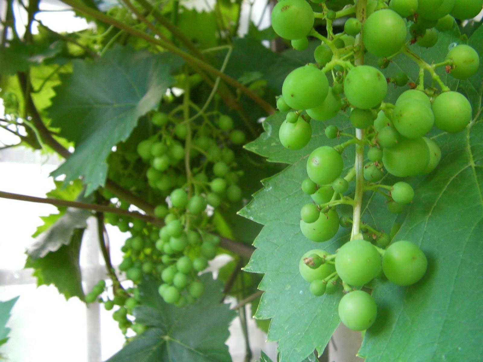 Les secrets de la taille et de la greffe des arbres fruitiers bio 07 petits secrets de la - Bouillie bordelaise sur arbres fruitiers en fleurs ...