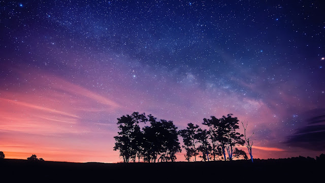 Purple Night Sky Stars Trees Silhouettes HD Wallpaper