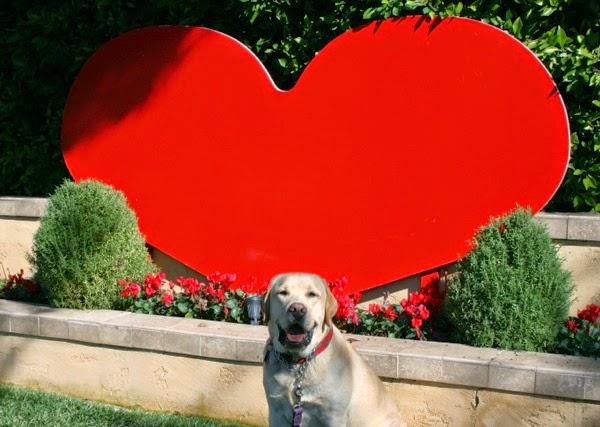 I heart Labradors