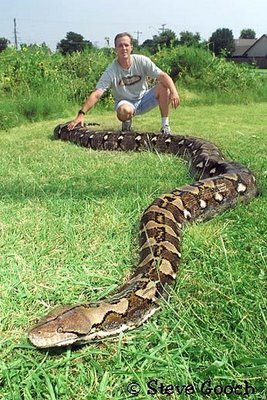 World Biggest SnakeWorld Biggest Snake