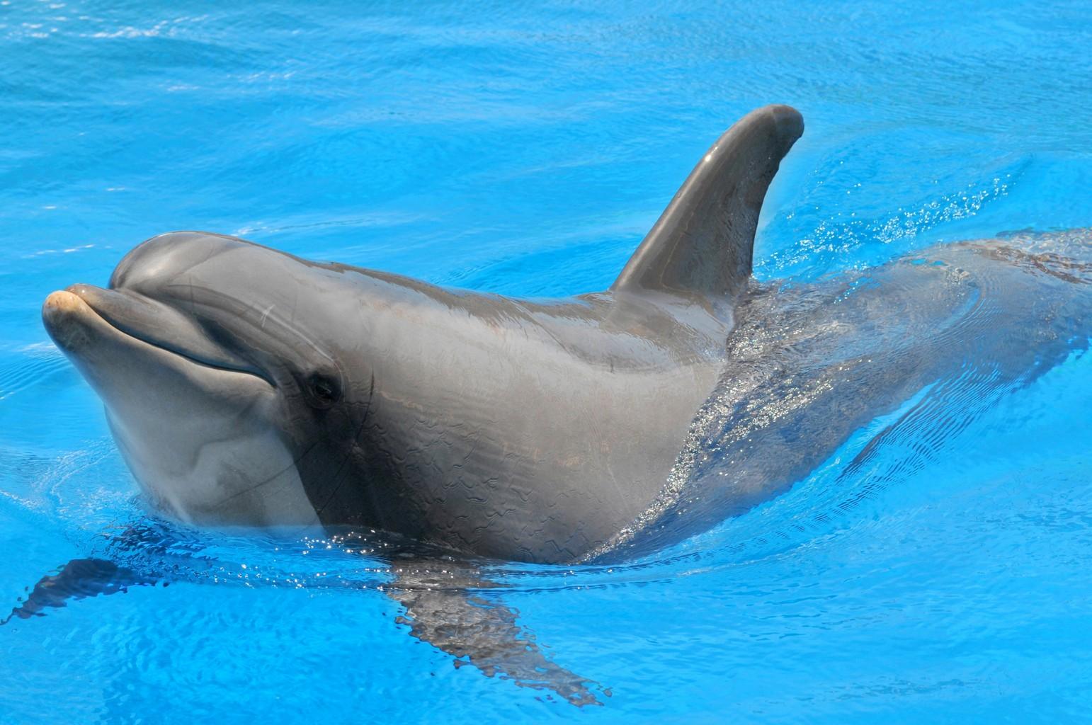 Zebra Classification Dolphin