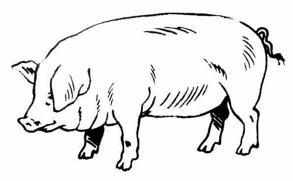 Coloriages a imprimer dessin cochon - Dessin cochon debout ...