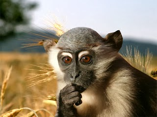 Check Out Monkey HD Wallpapers Cute Baby Smiling Funny Dangerous And