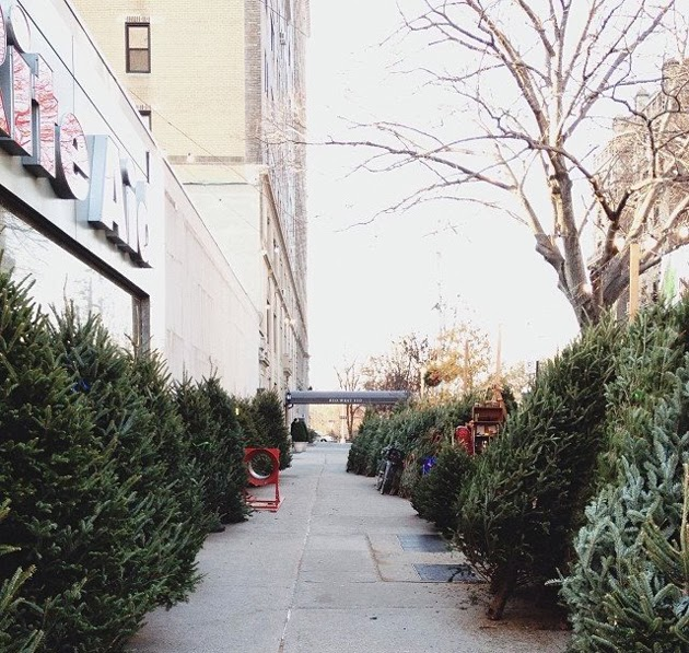 christmas trees nyc