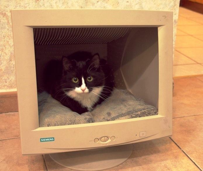 Camas para gatos hechas con monitores de pc y tv - Casas para gatos de madera ...