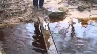 Хитрый котэ не хочет замочить лапки