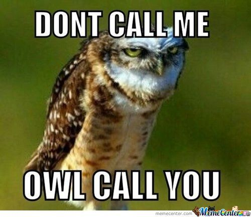 Idiots we all know one owl