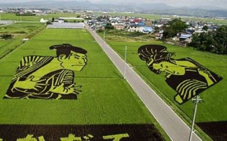 Unik Menarik Petani Jepang Menanam Padi Sawah Top Tidak Dijadikan