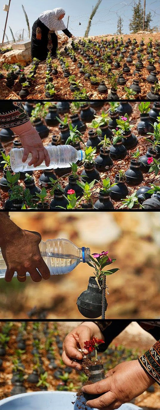 Palestinian woman collects tear gas canisters fired by Israeli Army. She grows flowers in them.