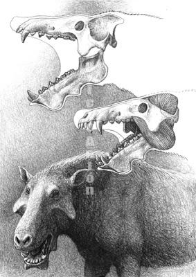 Entelodon skull