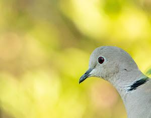 vogelfotos van Peter