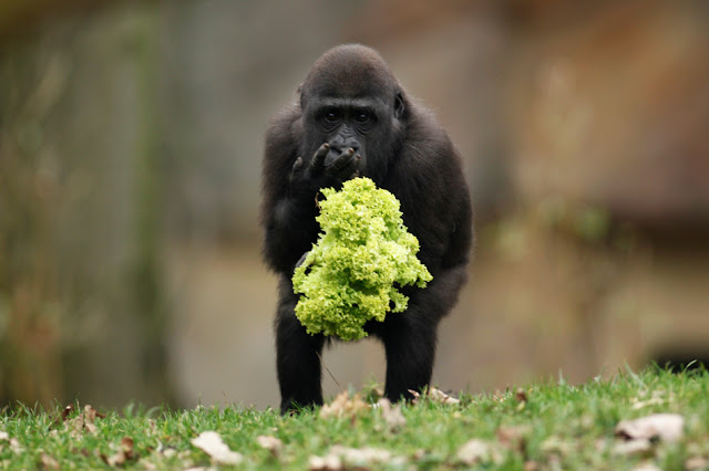 animal pictures, animal photos, best of 2011