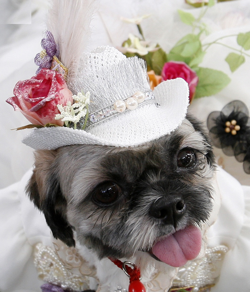 Wedding dresses for dogs for Wedding dress for dog