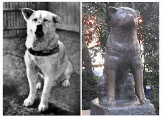 هاتشيكو .. الكلب الذي صنع له اليابنيون تمثالاً !ولكن لماذا؟