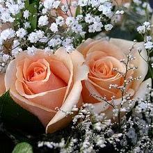 Preciosas Rosas Gracias a nuestra amiga ANAMA