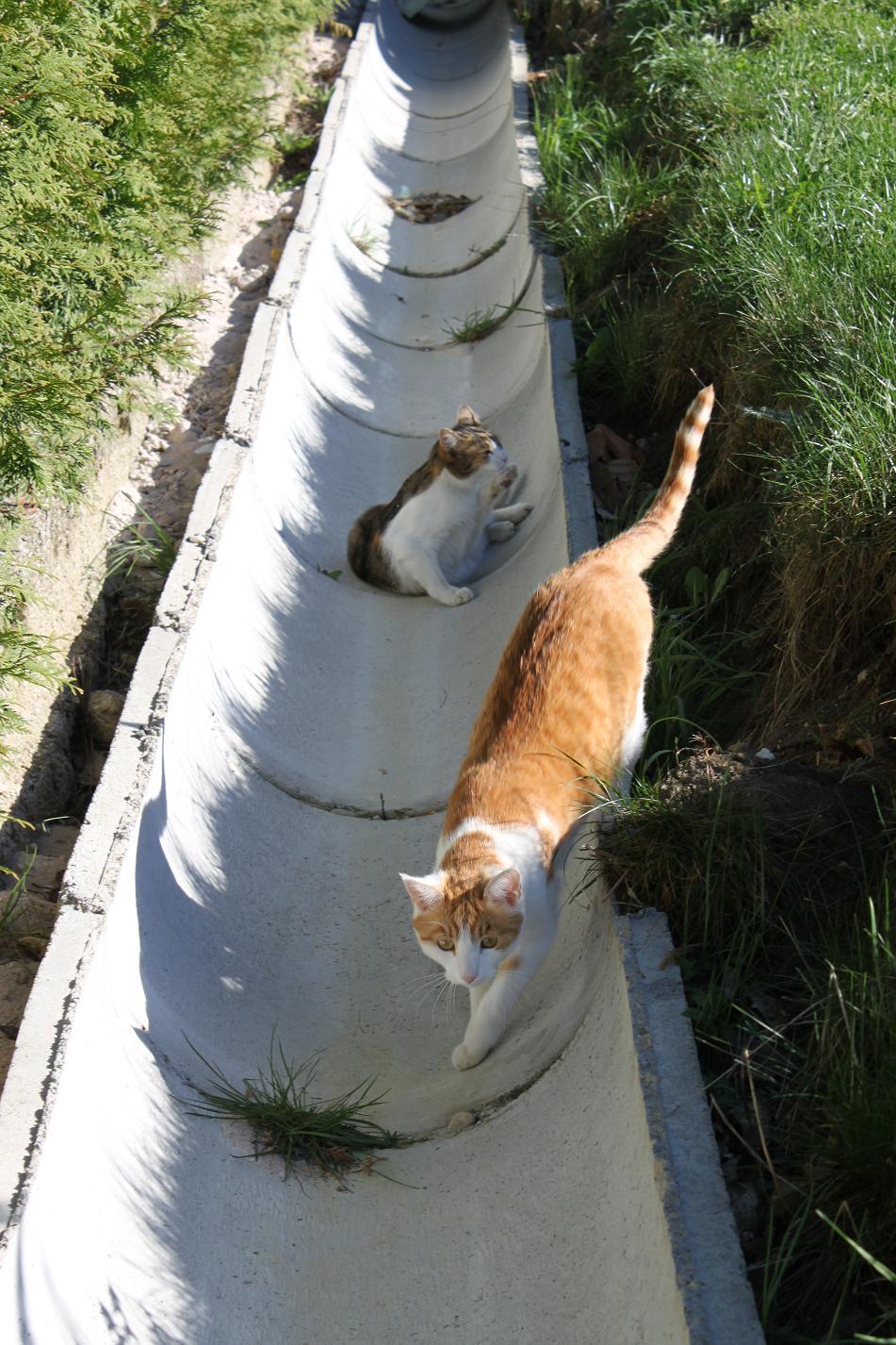 Wir wohnen im neuen haus april 2011 - Wasserrinne garten ...