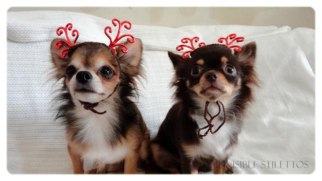 Reindeer Chihuahuas