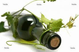 Frases de Vinhos!!