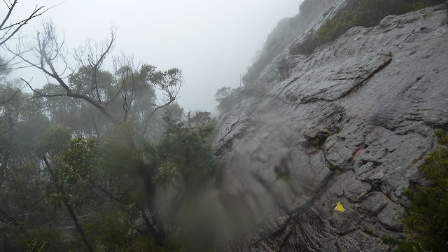 rain and mist on mount difficult range track 