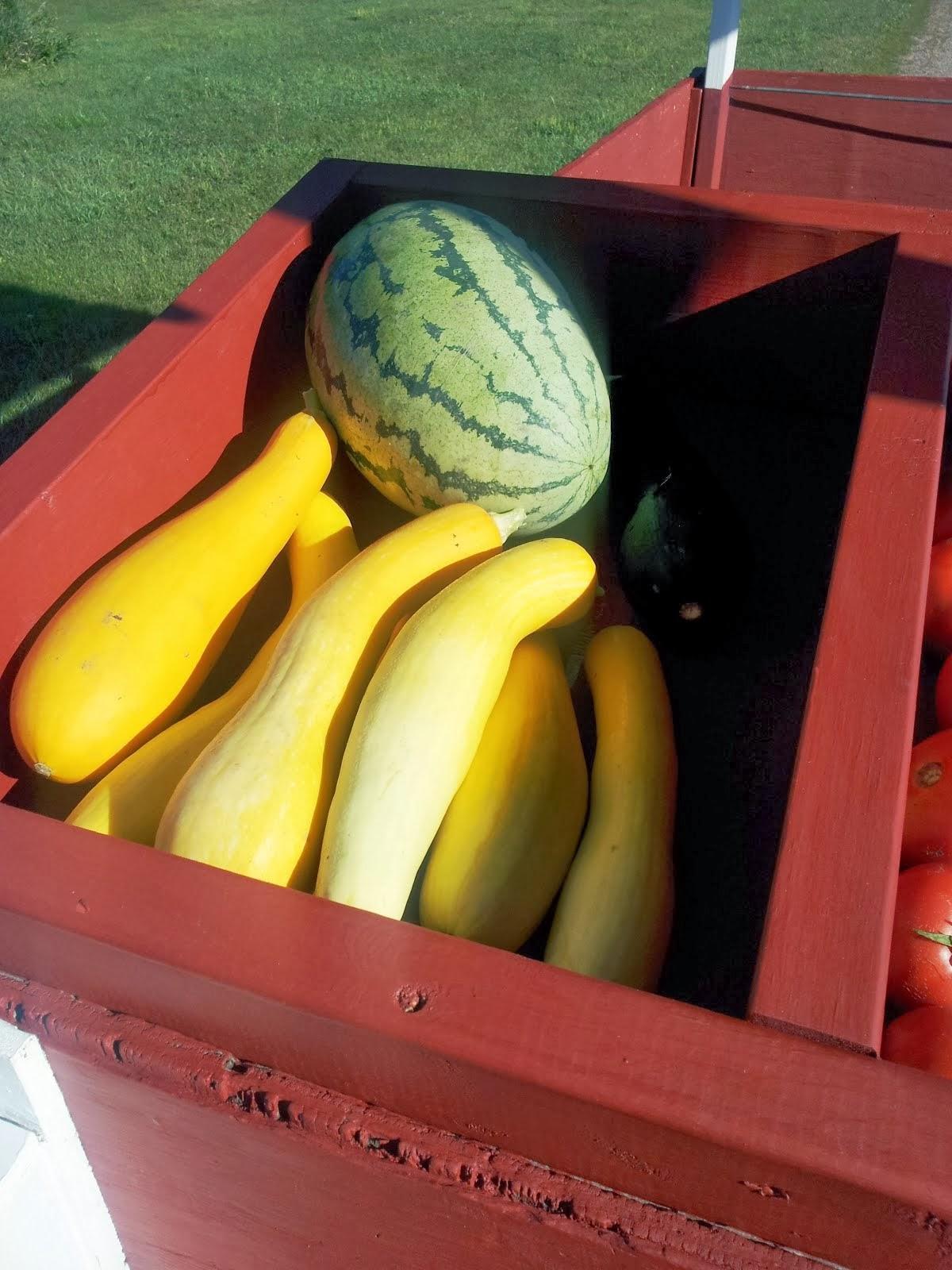 watermelon and summer squash