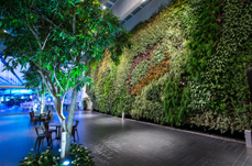 GreenWall vertical garden