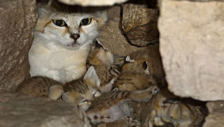 Rare kittens 2
