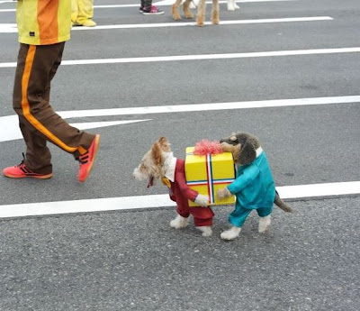 Best dog costume ever worn by a puppy. Costume creates the illusion of two dogs wearing suits carrying a gift box.