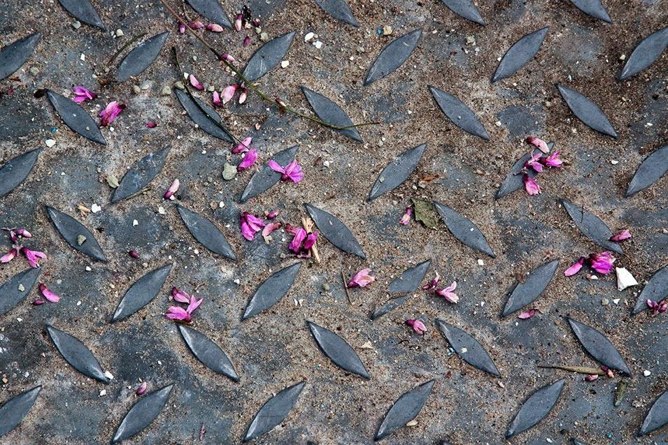 pink petals on metal sheet