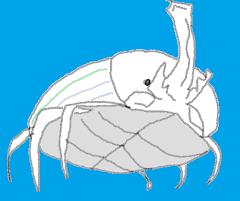 Escarabajo Hércules!