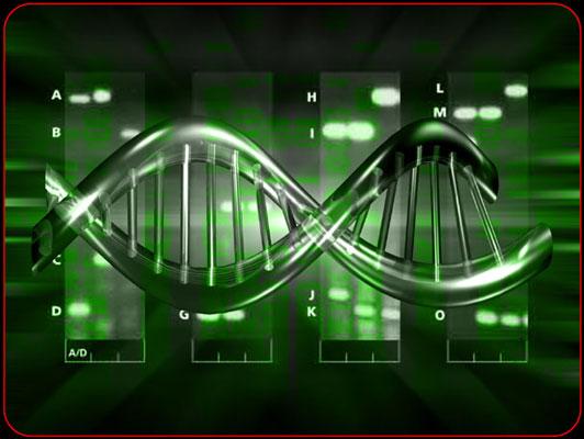Un ordinateur biologique capable de déchiffrer des images dans l'ADN
