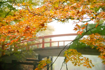 Kajika-bashi and autumn leaves in the fog.