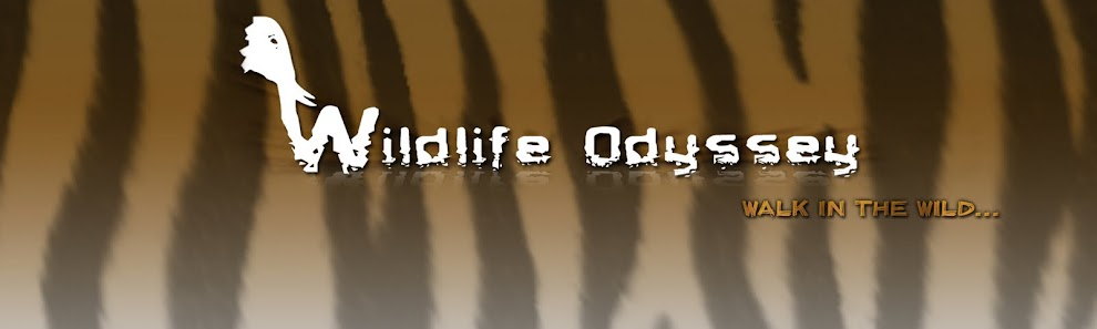 WildlifeOdyssey