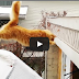 Waffles The Cat Slips On Ice And Fails Jump