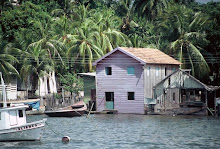 Floating Houses Near Manaus