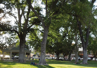 People Relaxing at Paso Robles City Park