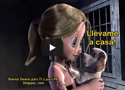 LLÉVAME A CASA !!! Un cortometraje que trata de adoptar con el corazón.