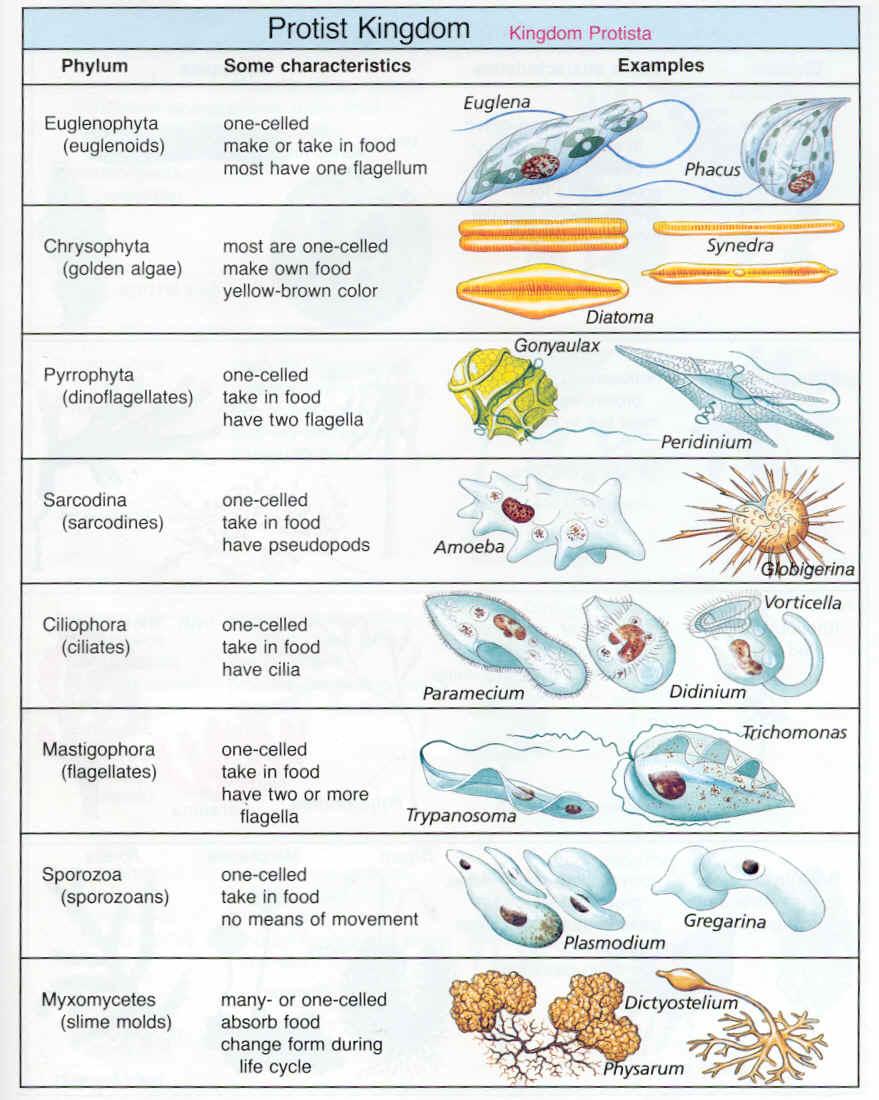 table 2 key characteristics of some organisms Springs and animal guts) algae, protozoa mushrooms, yeast, bread  table 2:  plants worksheet tracheophyta characteristics bryophyta ferns and fern  allies.
