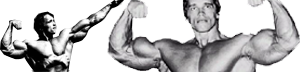 Bodybuilding and Fitness Zone