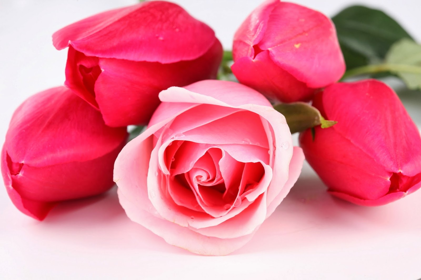Beautiful red pink roses flowers hd wallpapers izmirmasajfo
