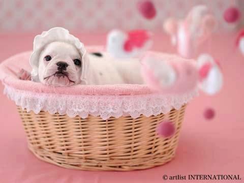 Cute Dogs 11