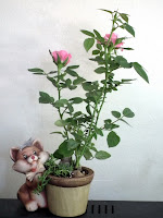 cat smelling pink mini-roses