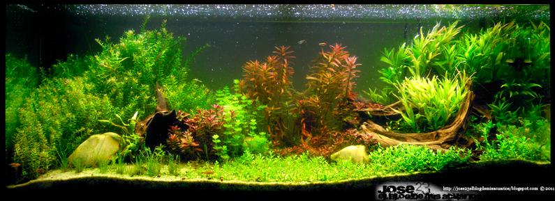 El jardin de los sue os y twitter jose23 el blog de for Peceras en jardines