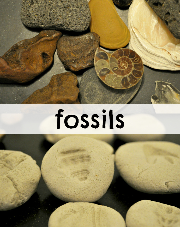 Fossil craft; toddler activity; dinosaurs and science