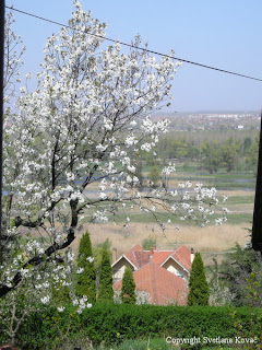 view of Novi Sad in the distance