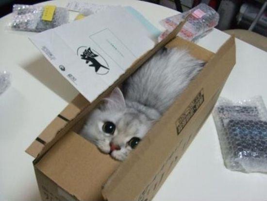 Cat Unboxing